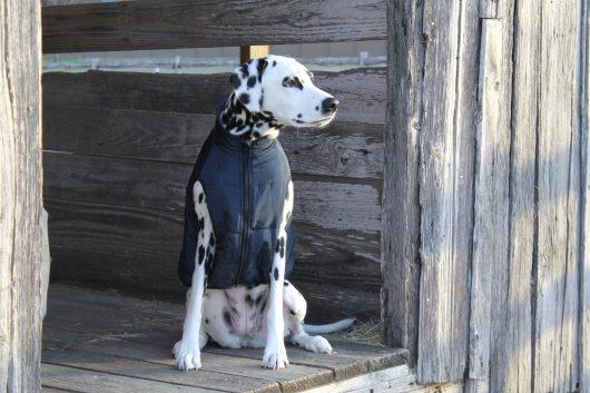 big dog vest ellie dog wear