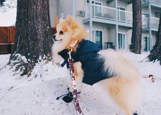 small dog vest ellie dog wear
